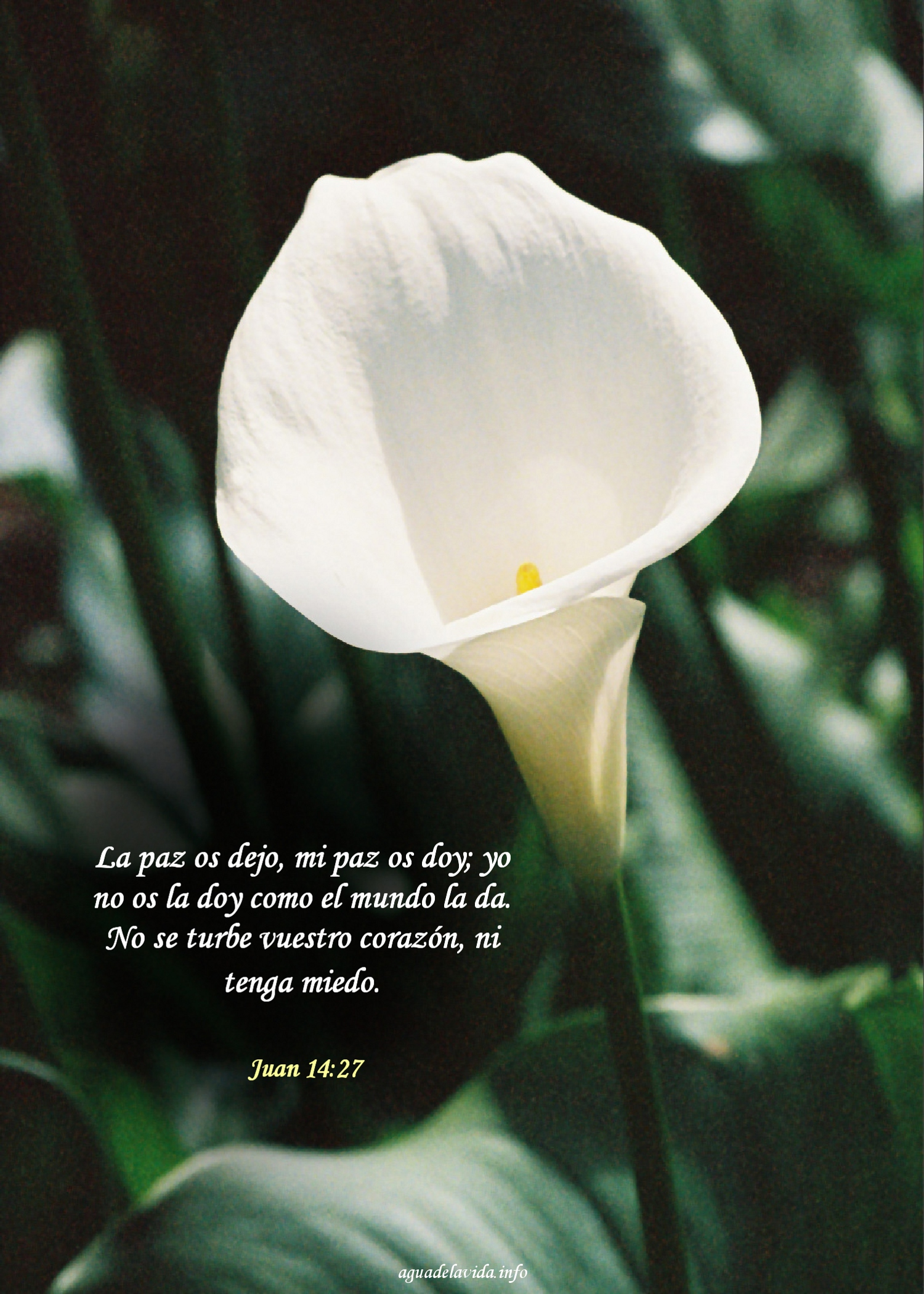 Lirio, Juan 14:17